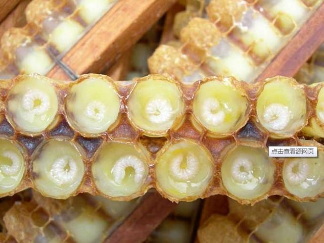 天然蜂皇浆