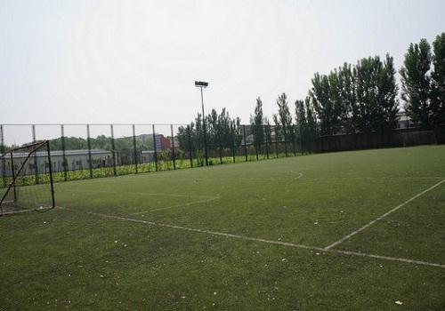 体育公园的足球场