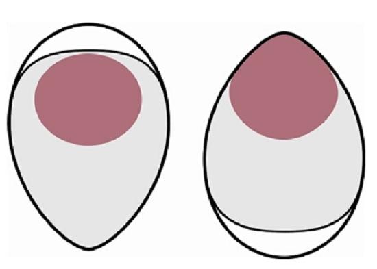 储存鸡蛋应大头朝上