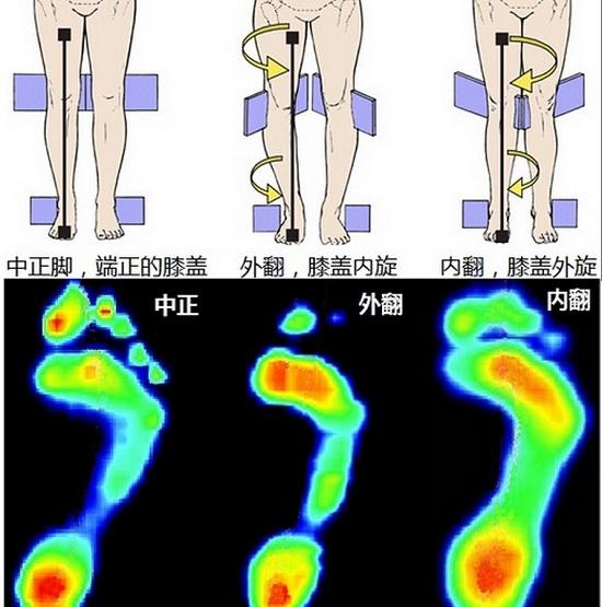 不同类型的膝盖和脚