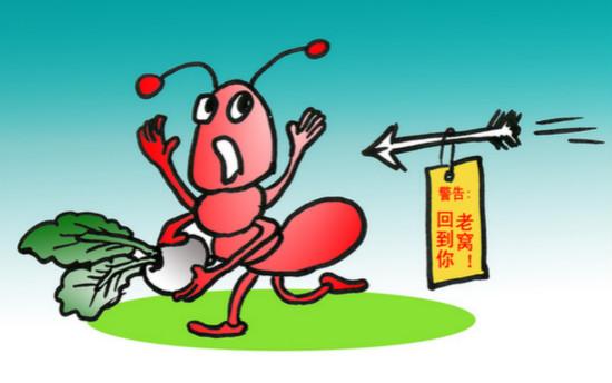 """人蚁大战:没有灭不了的蚂蚁,只有不努力的""""战士"""""""