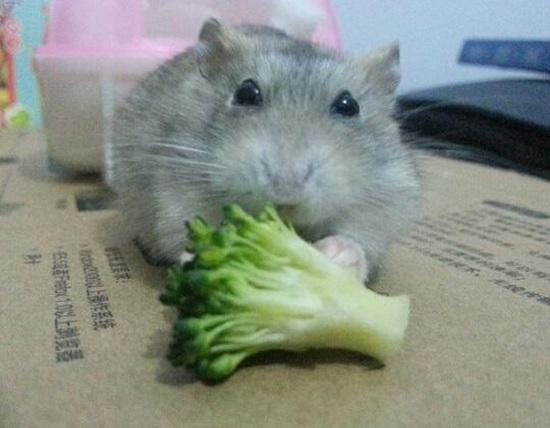 小仓鼠喜欢吃什么