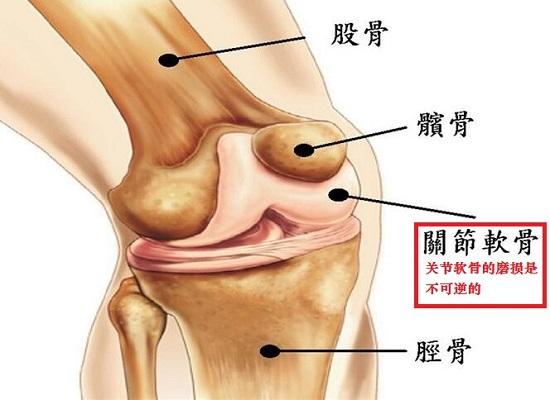 膝盖软骨及周边组织结构