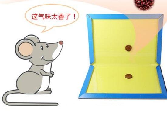 如何驱鼠灭鼠