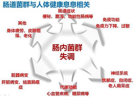 肠道菌群对人体的重要性