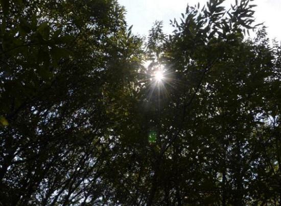 夏季的斑驳阳光
