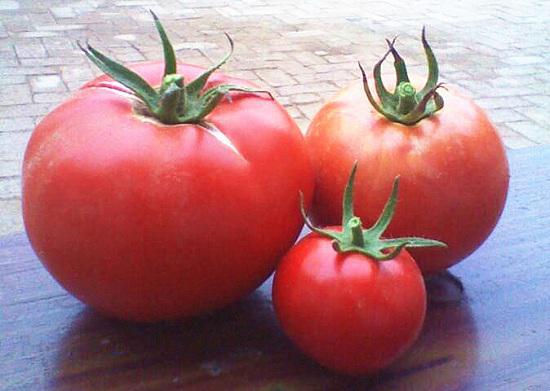 如何自制西红柿酱