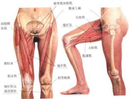 相关肌肉群