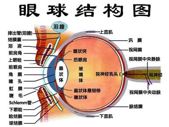 眼球的结构