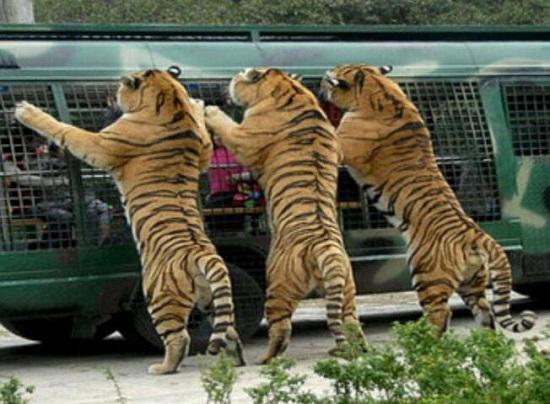 八达岭野生动物园游览有感