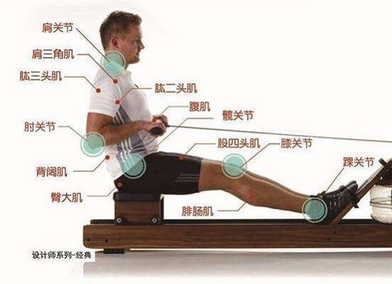 划船机运动所能调动的肌肉群