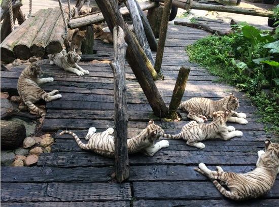 长隆野生动物世界游