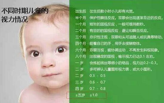 视力发育过程