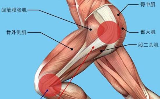 如何锻炼股四头肌和臀肌