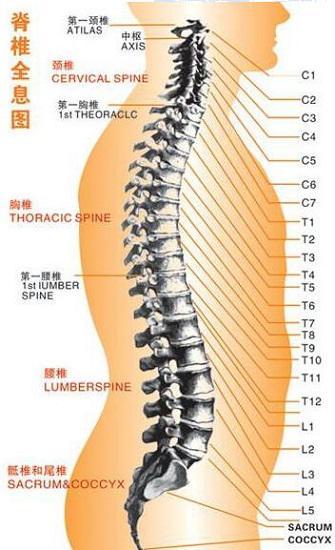 腰椎病患者可以做硬拉吗