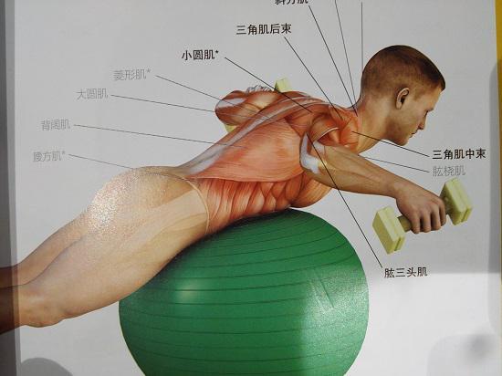 瑜伽球反飞鸟