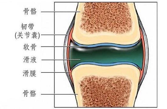 膝关节构造简图
