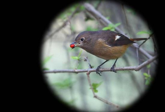 观鸟望远镜观测效果