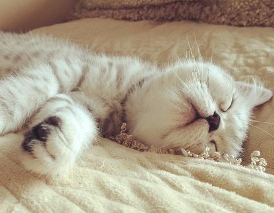疲惫的猫咪